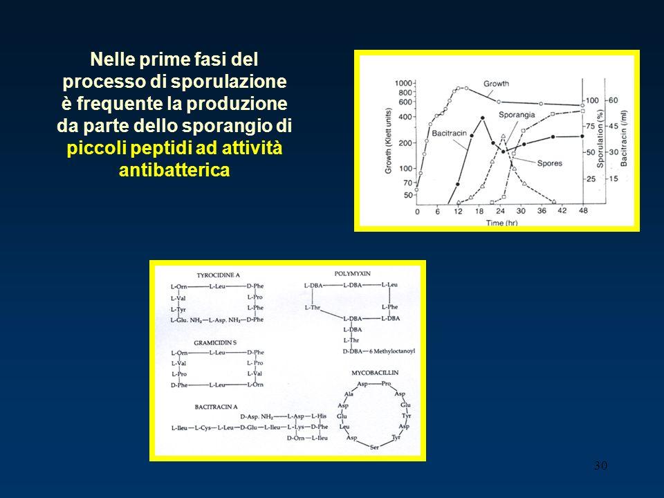 Nelle prime fasi del processo di sporulazione è frequente la produzione da parte dello sporangio di piccoli peptidi ad attività antibatterica