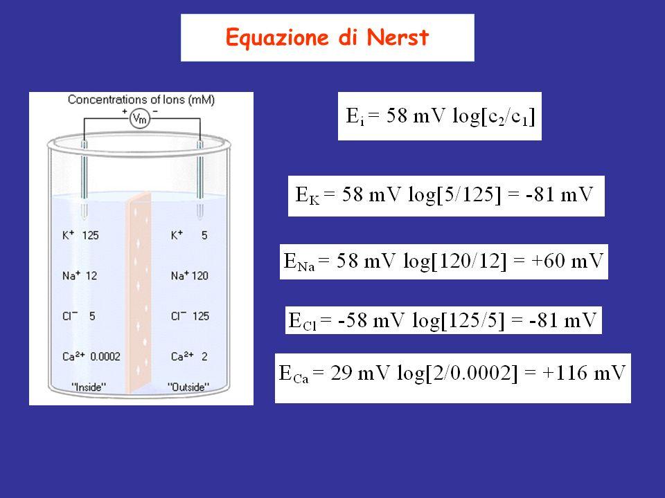 Equazione di Nerst