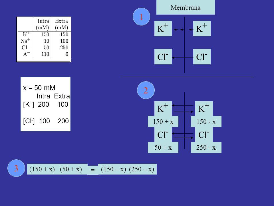 1 K+ K+ Cl- Cl- 2 K+ K+ Cl- Cl- 3 Membrana x = 50 mM Intra Extra