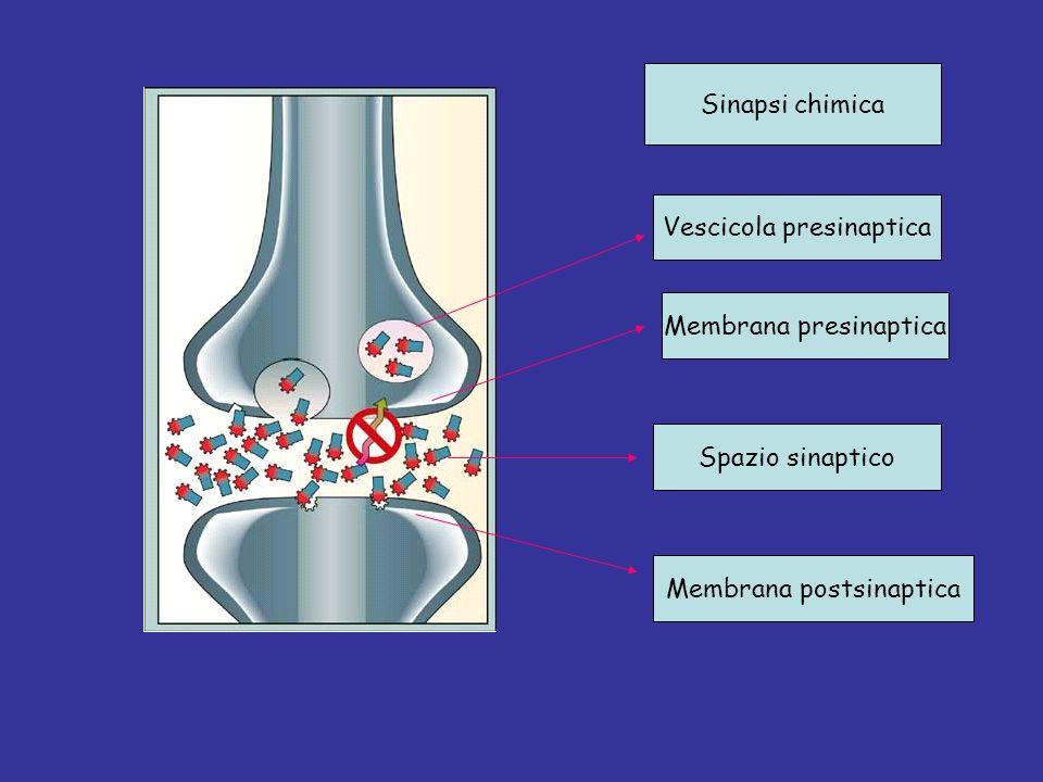 Vescicola presinaptica