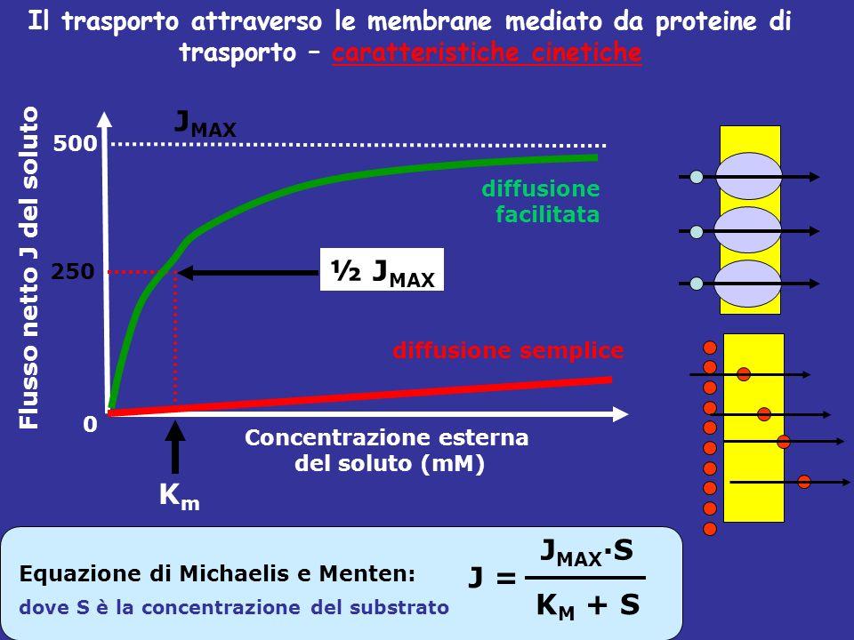 Concentrazione esterna