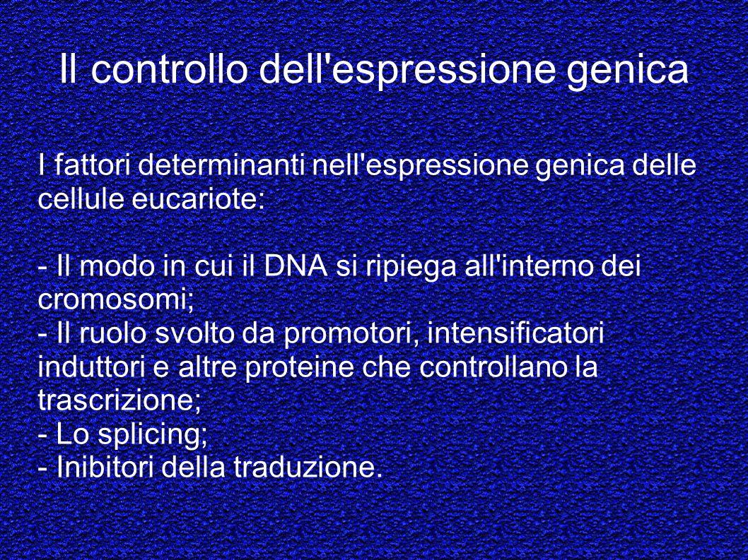 Il controllo dell espressione genica