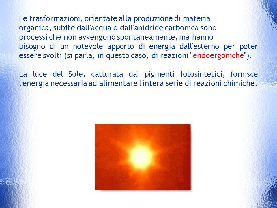 Le trasformazioni, orientate alla produzione di materia
