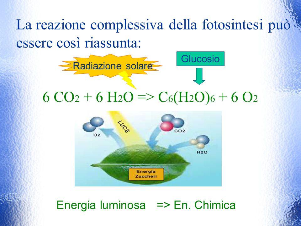 La reazione complessiva della fotosintesi può essere così riassunta: