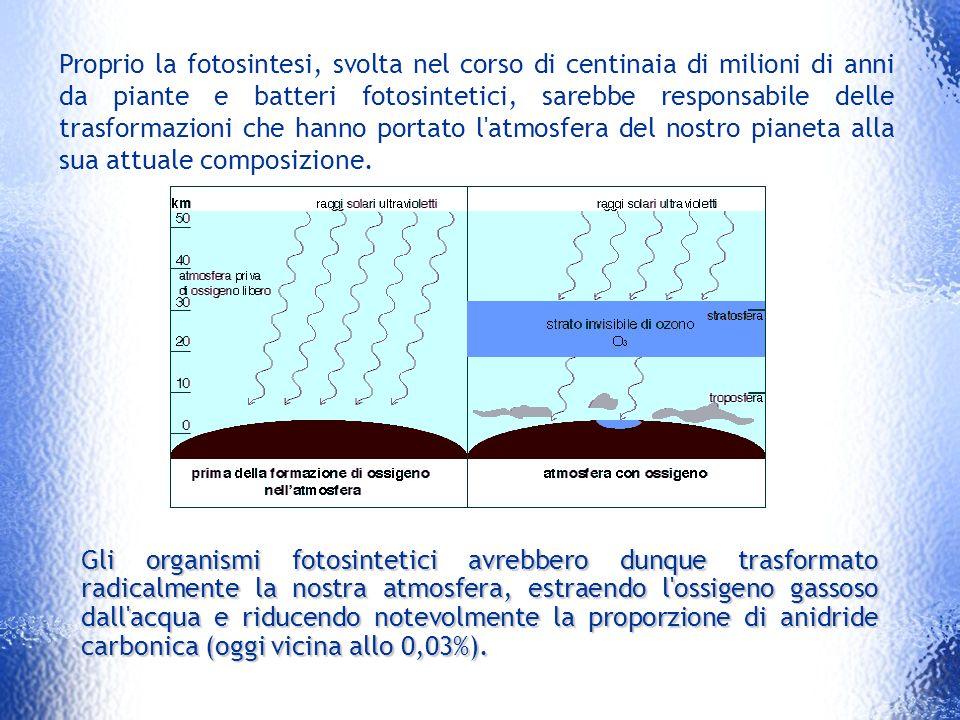 Proprio la fotosintesi, svolta nel corso di centinaia di milioni di anni da piante e batteri fotosintetici, sarebbe responsabile delle trasformazioni che hanno portato l atmosfera del nostro pianeta alla sua attuale composizione.