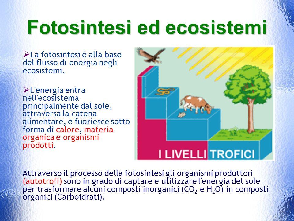 Fotosintesi ed ecosistemi
