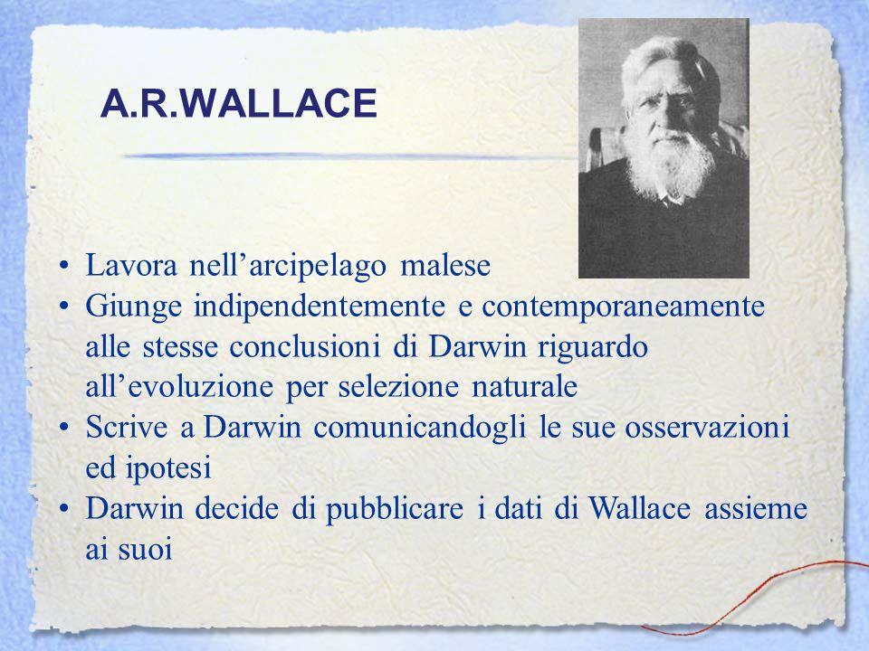 A.R.WALLACE Lavora nell'arcipelago malese