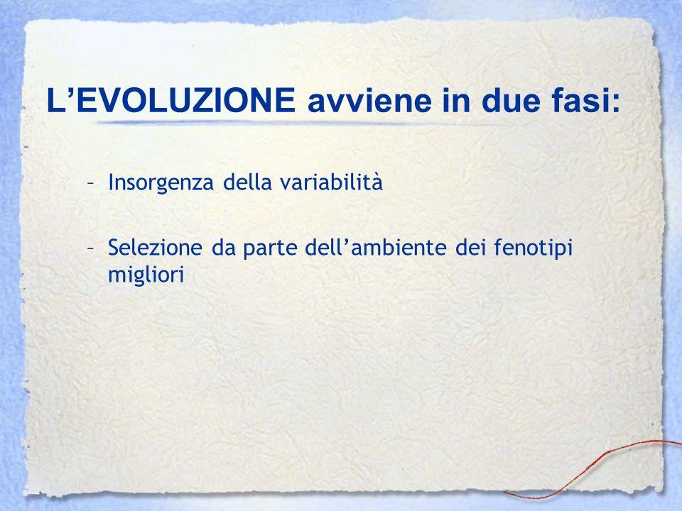 L'EVOLUZIONE avviene in due fasi: