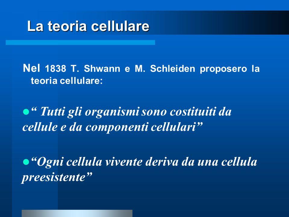 La teoria cellulare Nel 1838 T. Shwann e M. Schleiden proposero la teoria cellulare: