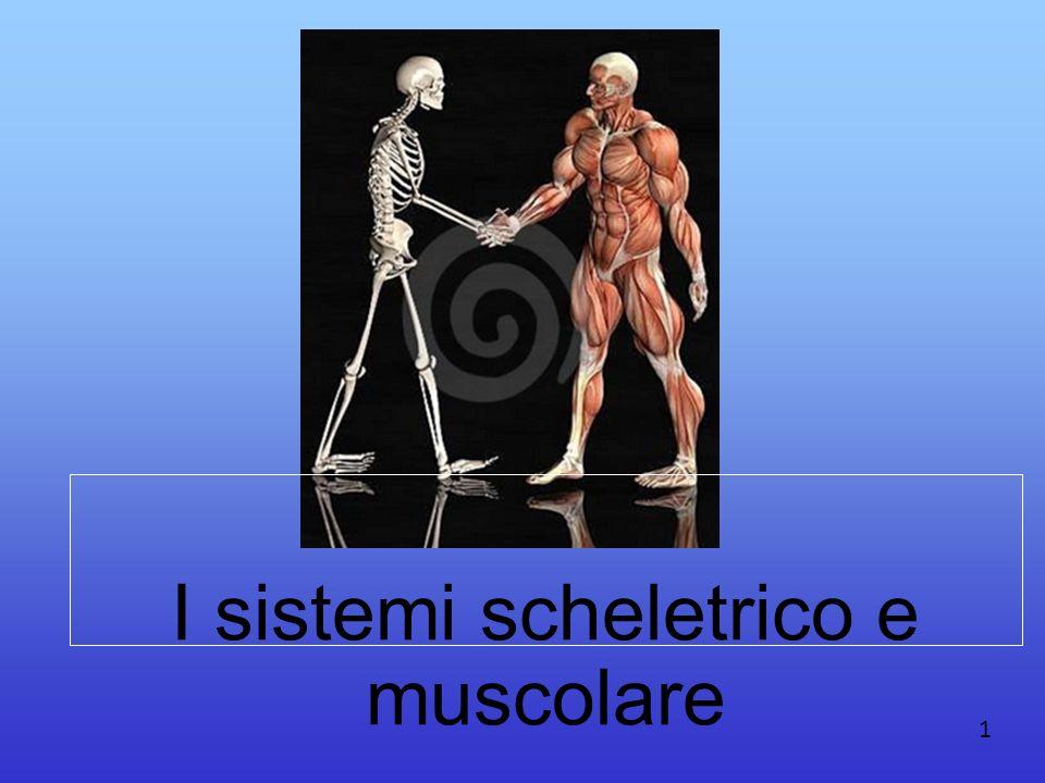 I sistemi scheletrico e muscolare