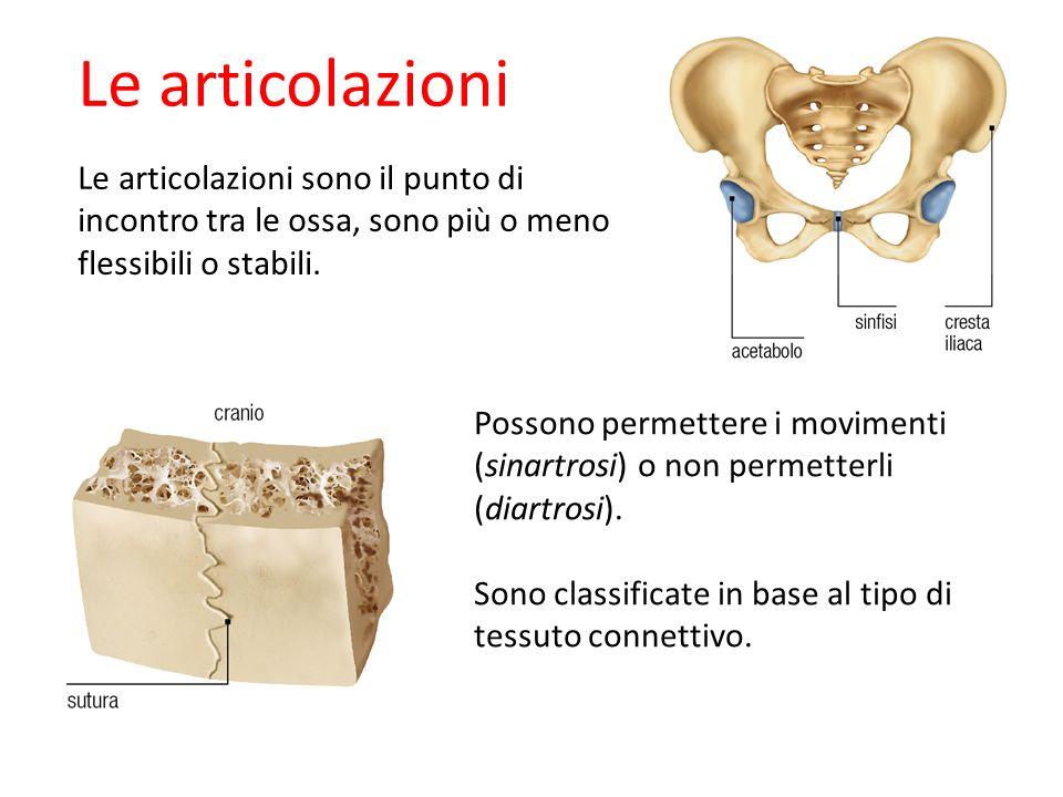 27/11/1109/09/12. Le articolazioni. Le articolazioni sono il punto di incontro tra le ossa, sono più o meno flessibili o stabili.