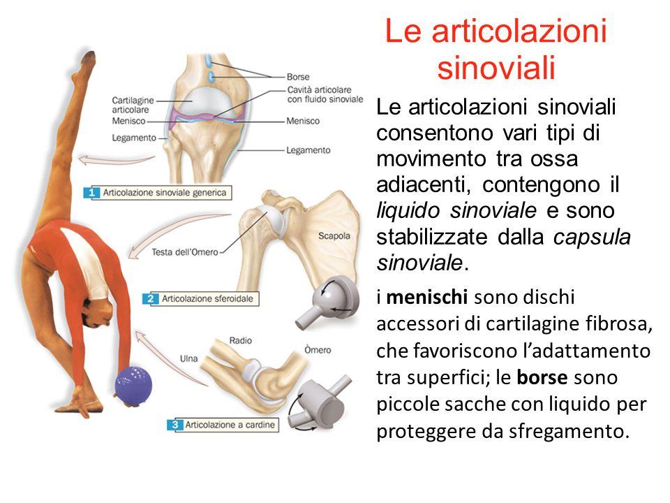 I sistemi scheletrico e muscolare ppt video online scaricare for Tipi di schierandosi per le case