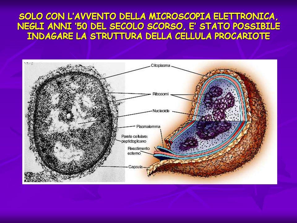 SOLO CON L'AVVENTO DELLA MICROSCOPIA ELETTRONICA, NEGLI ANNI '50 DEL SECOLO SCORSO, E' STATO POSSIBILE INDAGARE LA STRUTTURA DELLA CELLULA PROCARIOTE