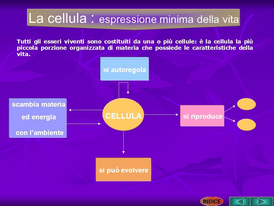 La cellula : espressione minima della vita