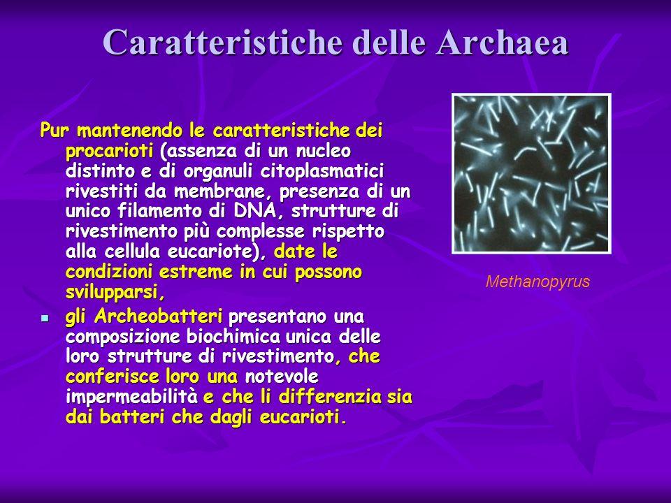 Caratteristiche delle Archaea