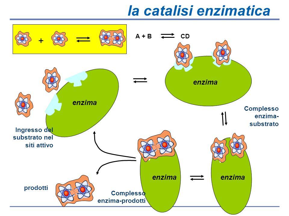 la catalisi enzimatica