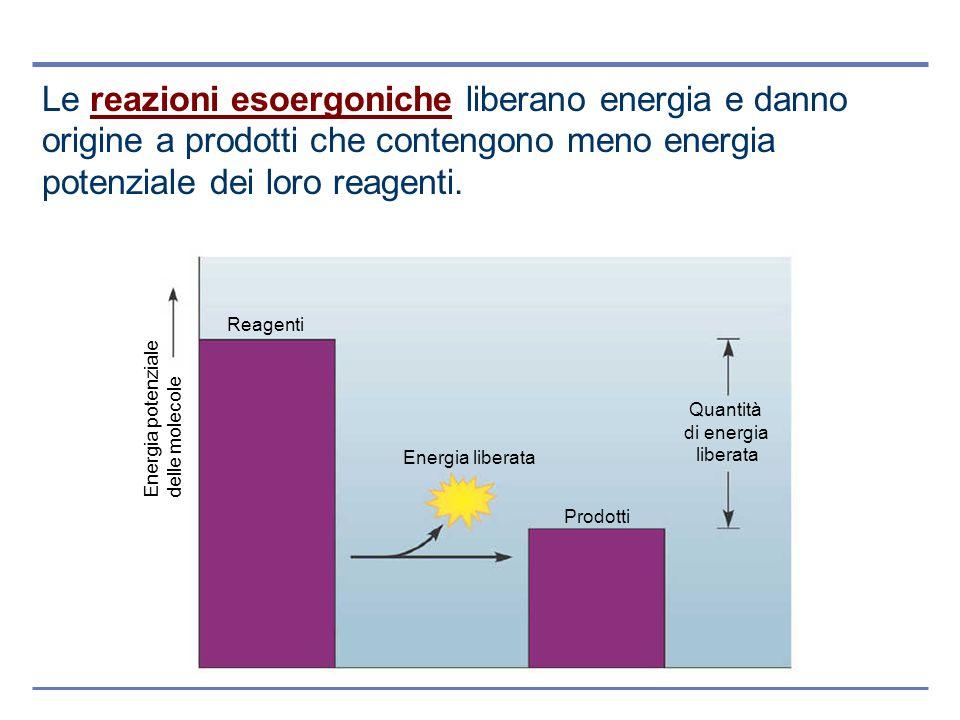 Le reazioni esoergoniche liberano energia e danno origine a prodotti che contengono meno energia potenziale dei loro reagenti.