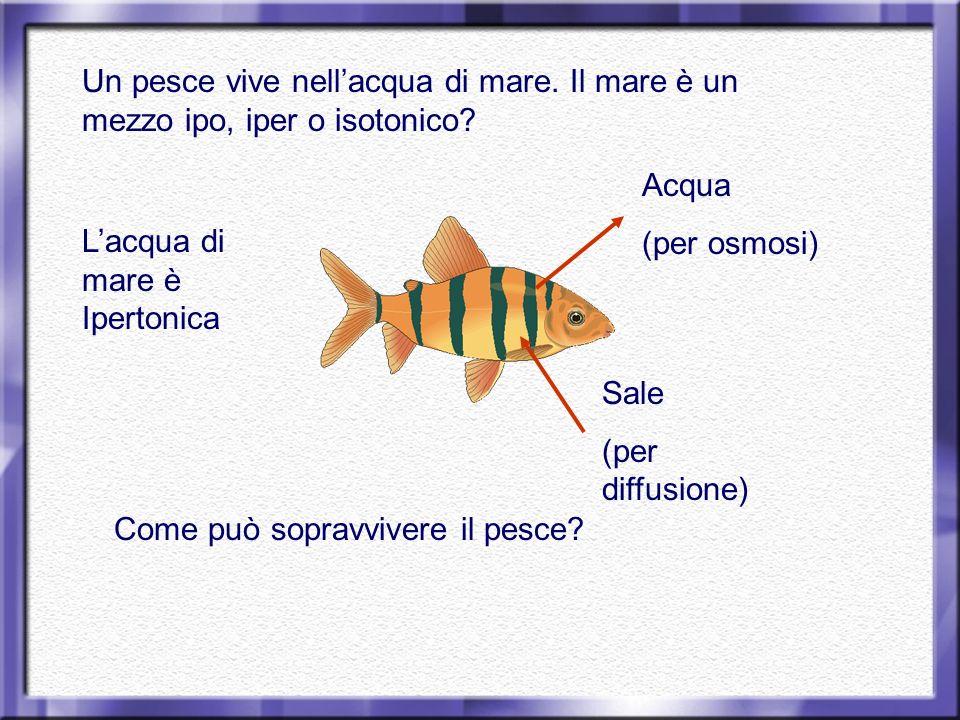 Un pesce vive nell'acqua di mare