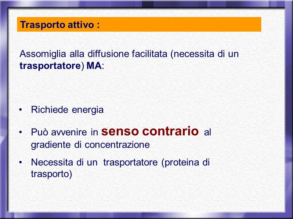 Trasporto attivo : Assomiglia alla diffusione facilitata (necessita di un trasportatore) MA: Richiede energia.