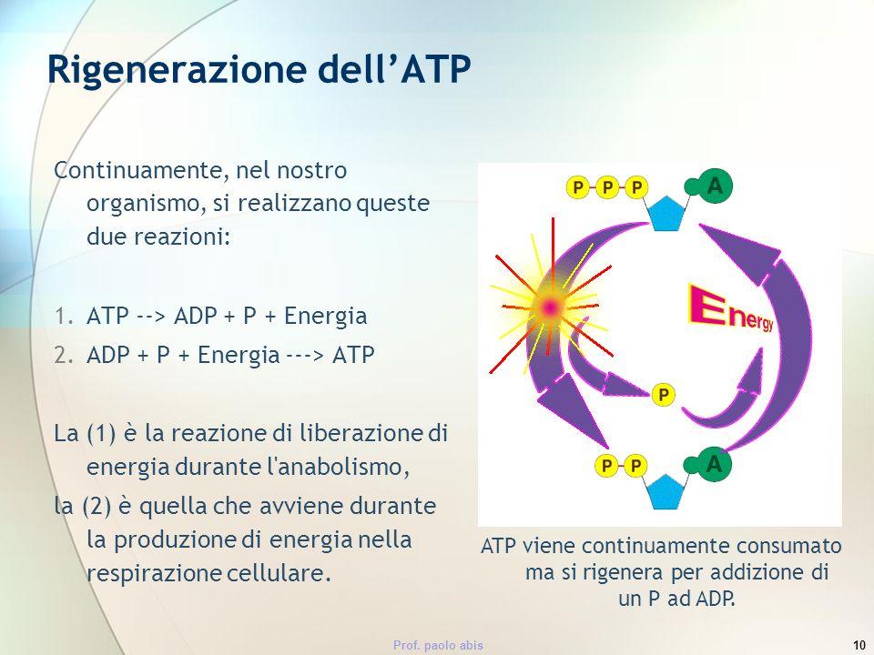 Rigenerazione dell'ATP