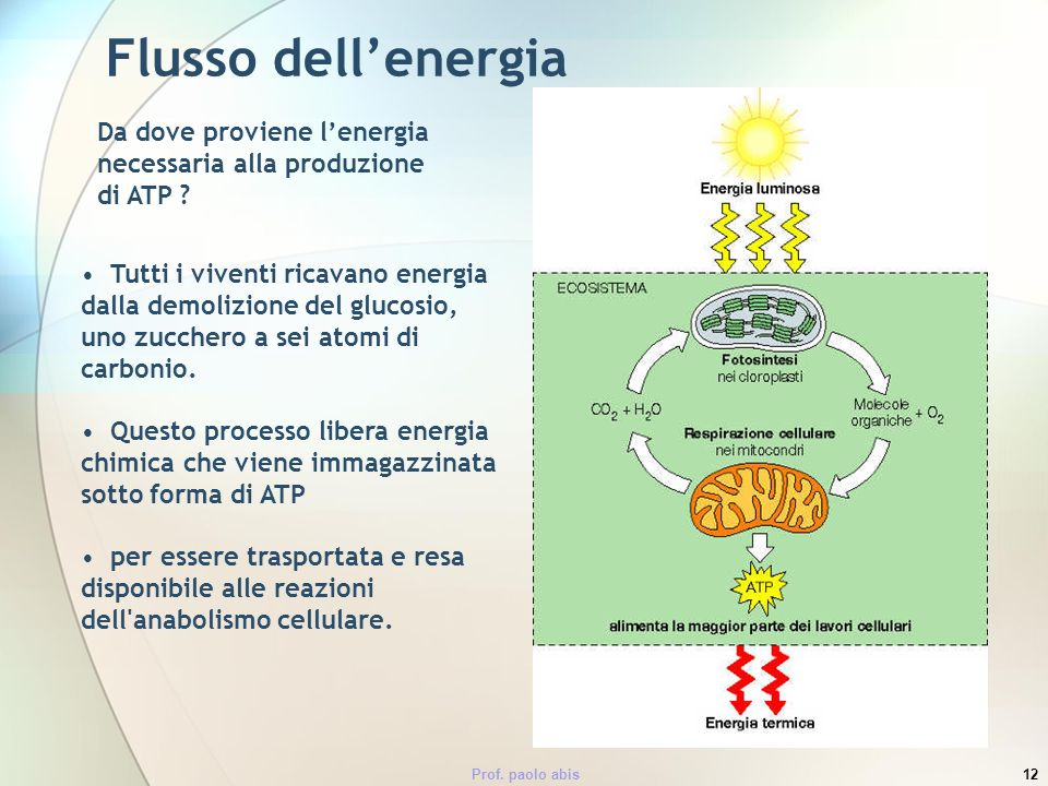 Flusso dell'energia Da dove proviene l'energia necessaria alla produzione di ATP