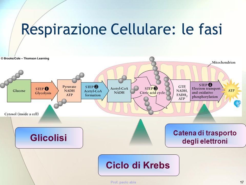 Respirazione Cellulare: le fasi