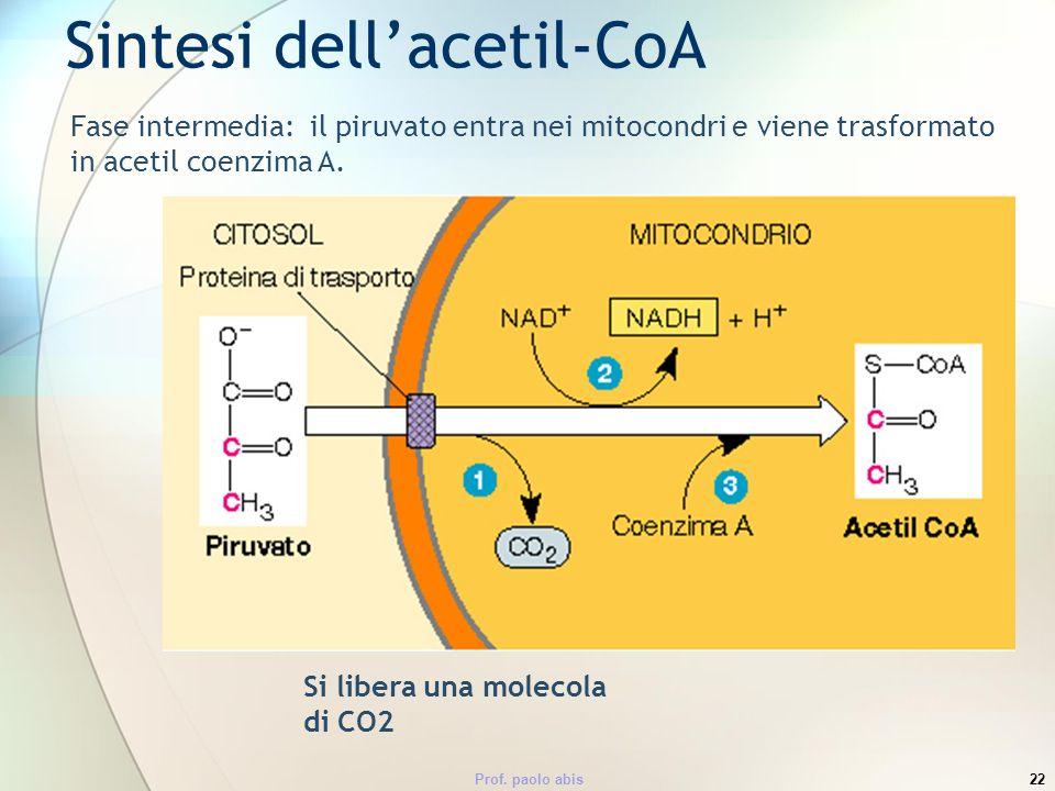 Sintesi dell'acetil-CoA