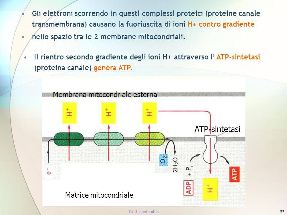 Gli elettroni scorrendo in questi complessi proteici (proteine canale transmembrana) causano la fuoriuscita di ioni H+ contro gradiente