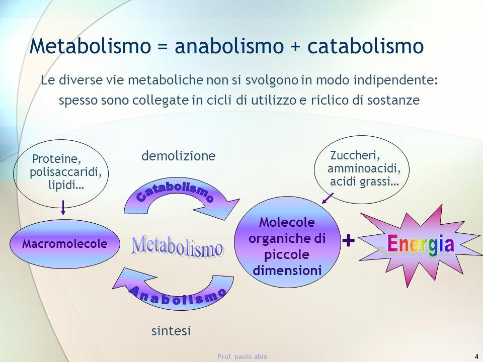 Metabolismo = anabolismo + catabolismo