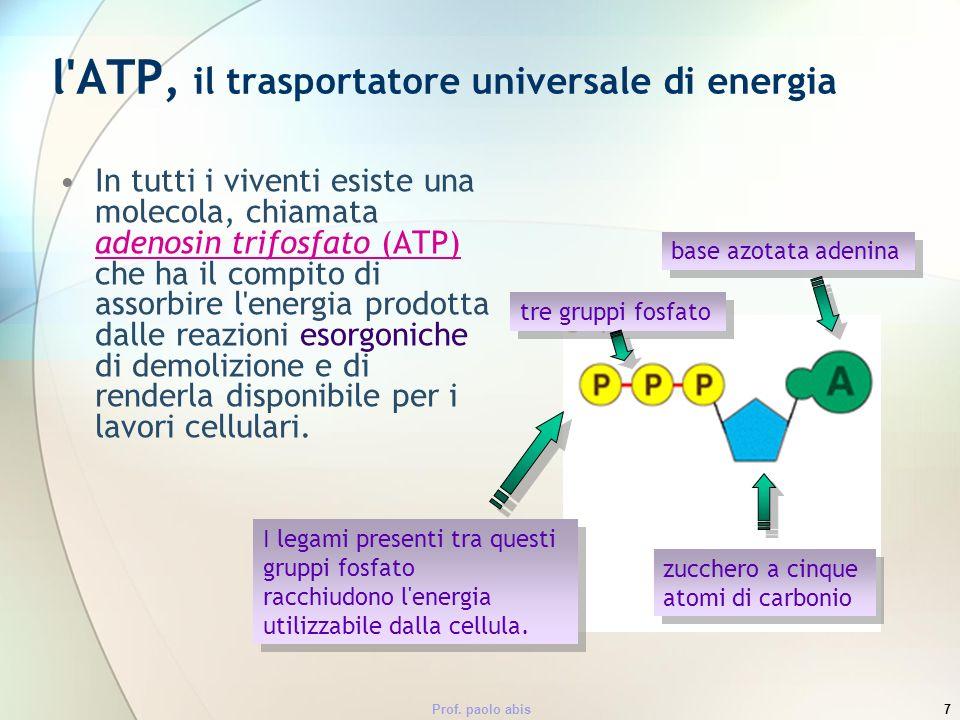 l ATP, il trasportatore universale di energia