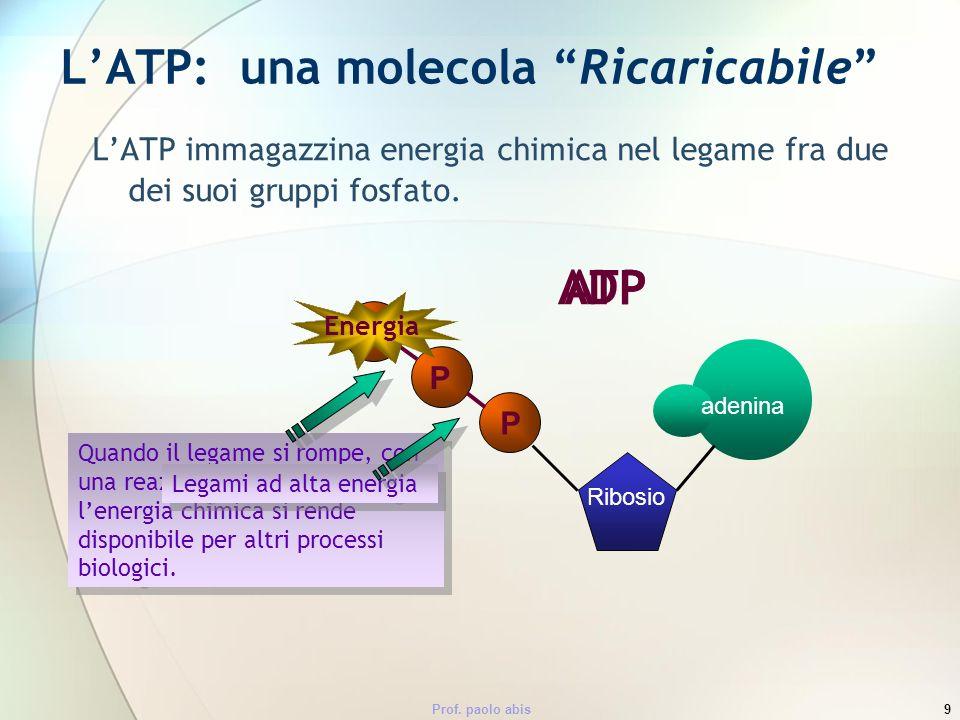 L'ATP: una molecola Ricaricabile