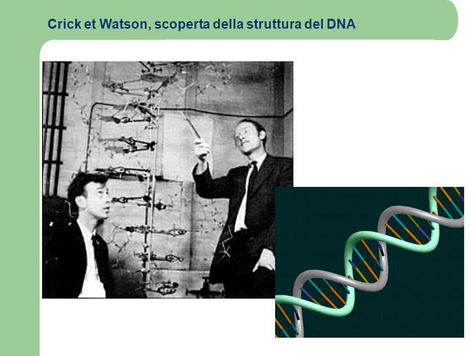 Crick et Watson, scoperta della struttura del DNA