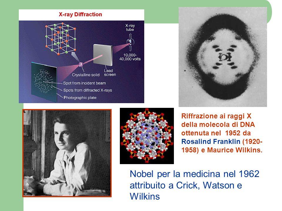 Nobel per la medicina nel 1962 attribuito a Crick, Watson e Wilkins