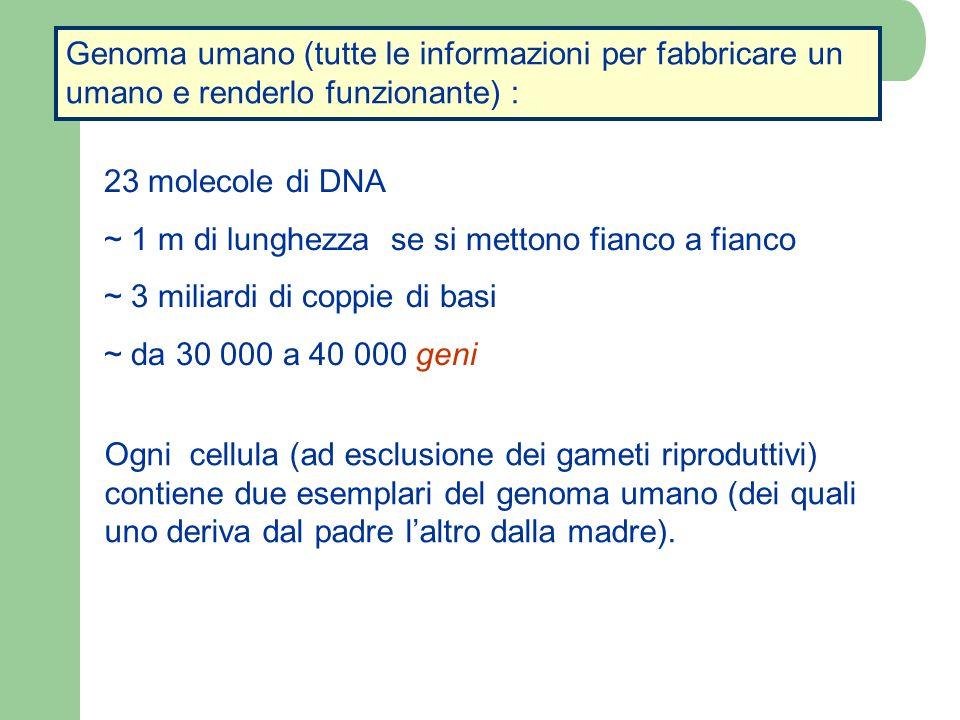 Genoma umano (tutte le informazioni per fabbricare un umano e renderlo funzionante) :