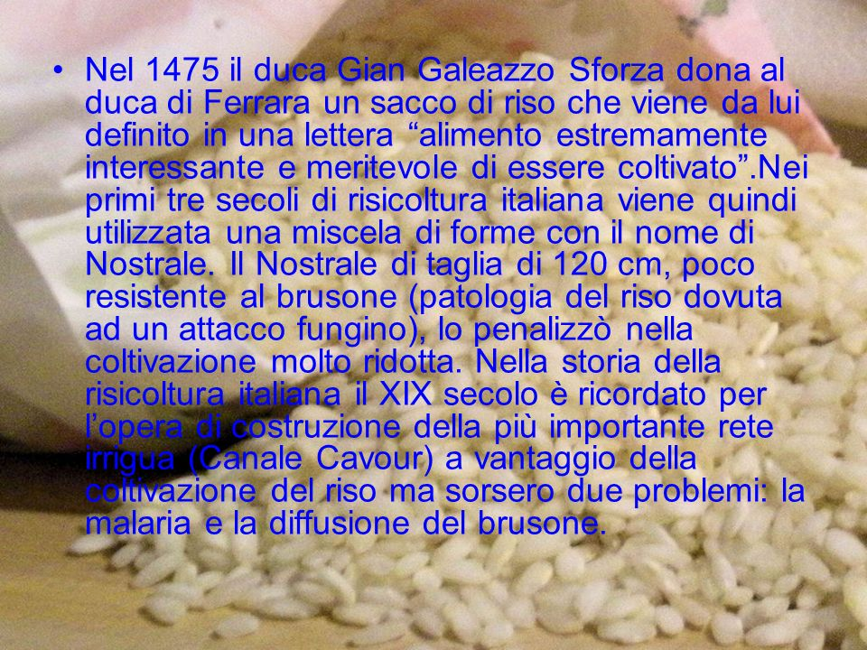 Nel 1475 il duca Gian Galeazzo Sforza dona al duca di Ferrara un sacco di riso che viene da lui definito in una lettera alimento estremamente interessante e meritevole di essere coltivato .Nei primi tre secoli di risicoltura italiana viene quindi utilizzata una miscela di forme con il nome di Nostrale.