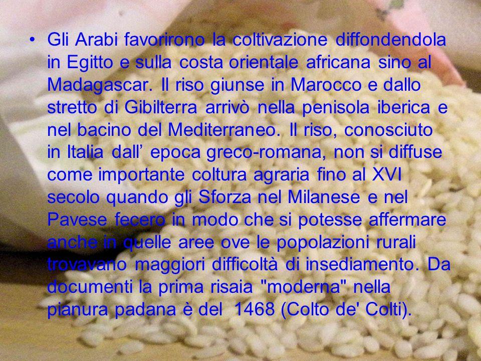 Gli Arabi favorirono la coltivazione diffondendola in Egitto e sulla costa orientale africana sino al Madagascar.