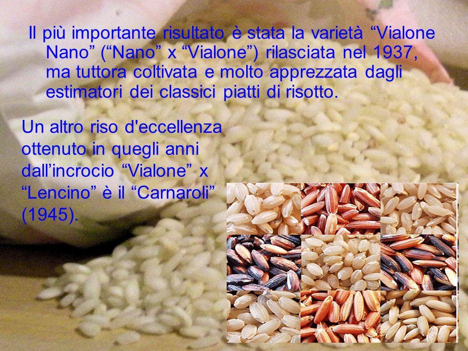 Il più importante risultato è stata la varietà Vialone Nano ( Nano x Vialone ) rilasciata nel 1937, ma tuttora coltivata e molto apprezzata dagli estimatori dei classici piatti di risotto.