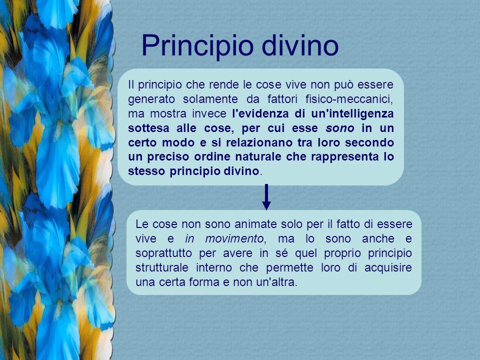 Principio divino