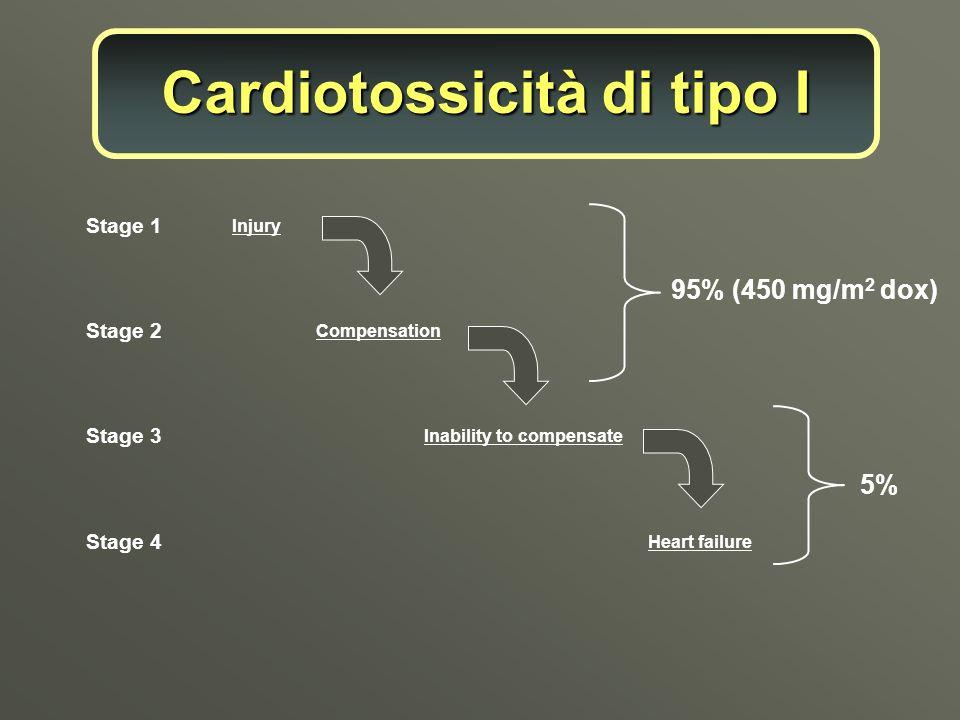 Cardiotossicità di tipo I