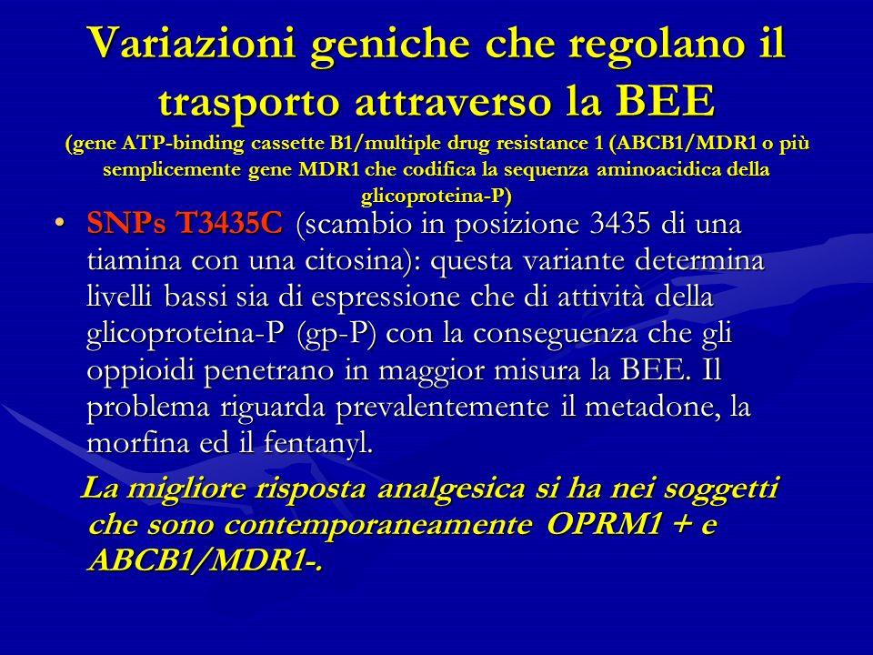 Variazioni geniche che regolano il trasporto attraverso la BEE (gene ATP-binding cassette B1/multiple drug resistance 1 (ABCB1/MDR1 o più semplicemente gene MDR1 che codifica la sequenza aminoacidica della glicoproteina-P)
