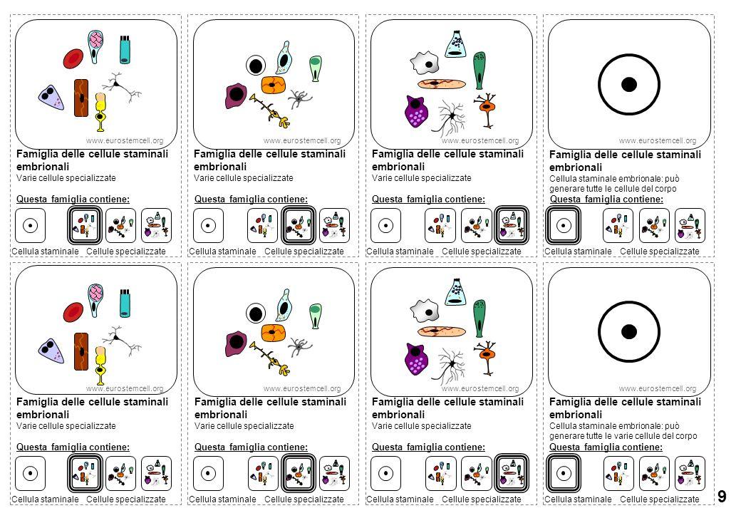 9 Famiglia delle cellule staminali embrionali