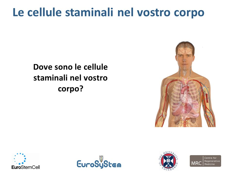 Dove sono le cellule staminali nel vostro corpo