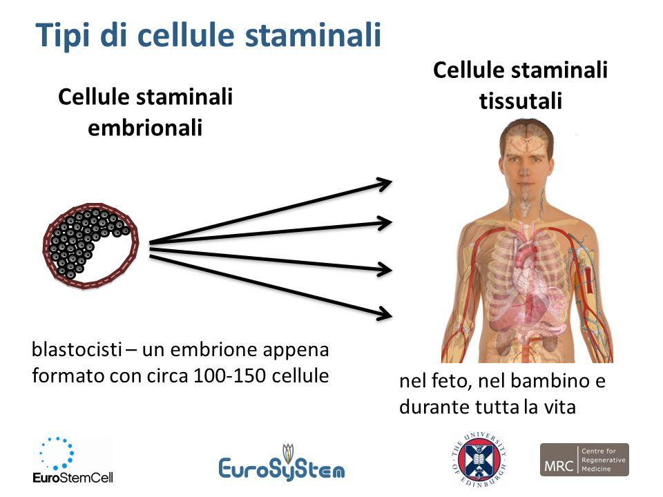 Cellule staminali tissutali Cellule staminali embrionali