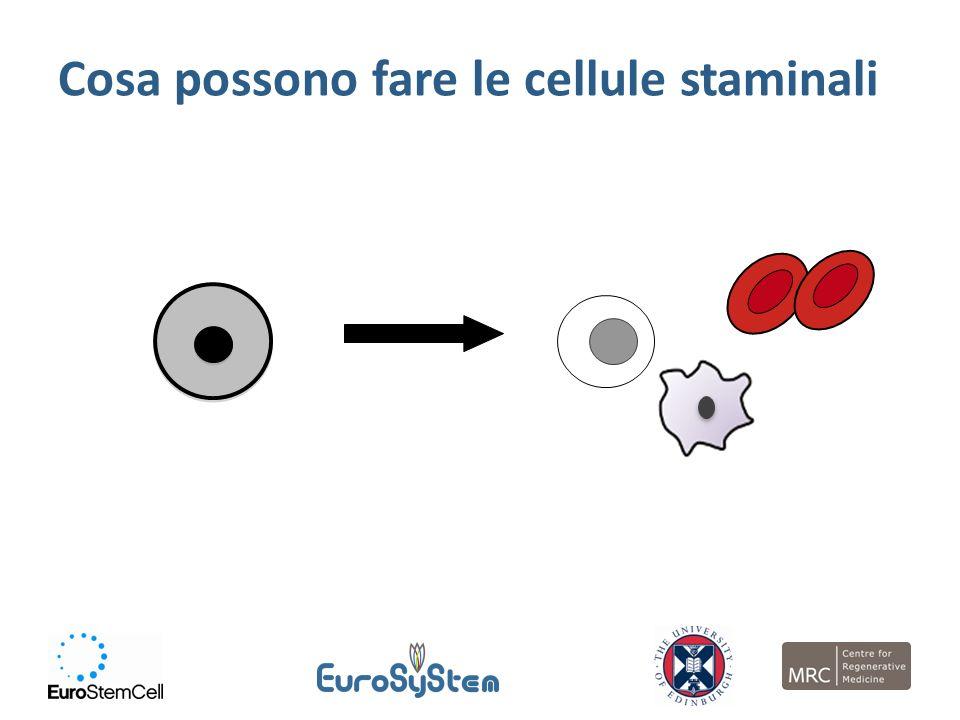 Cosa possono fare le cellule staminali