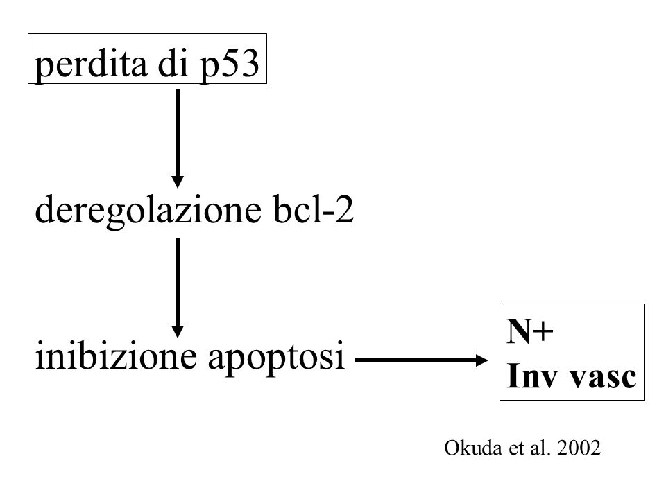 perdita di p53 deregolazione bcl-2 inibizione apoptosi N+ Inv vasc