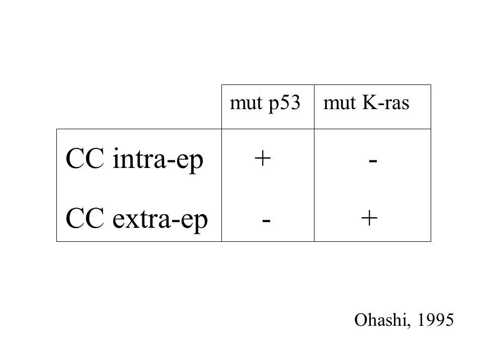 mut p53 mut K-ras CC intra-ep + - CC extra-ep - + Ohashi, 1995