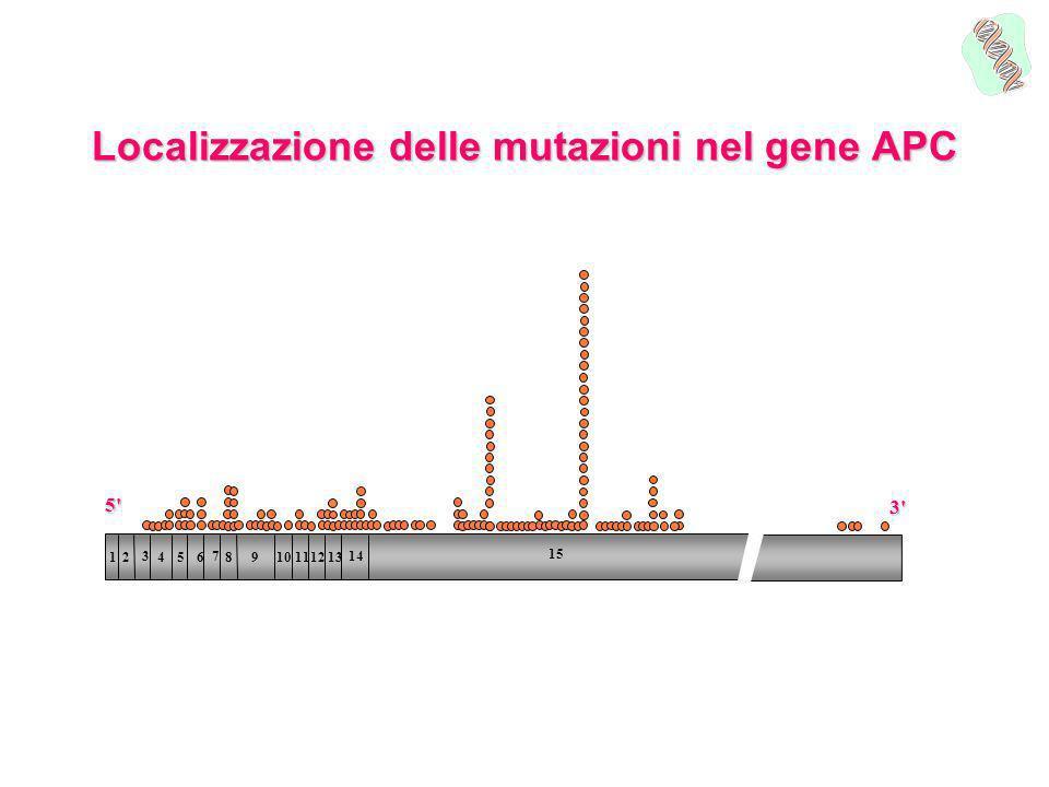 Localizzazione delle mutazioni nel gene APC