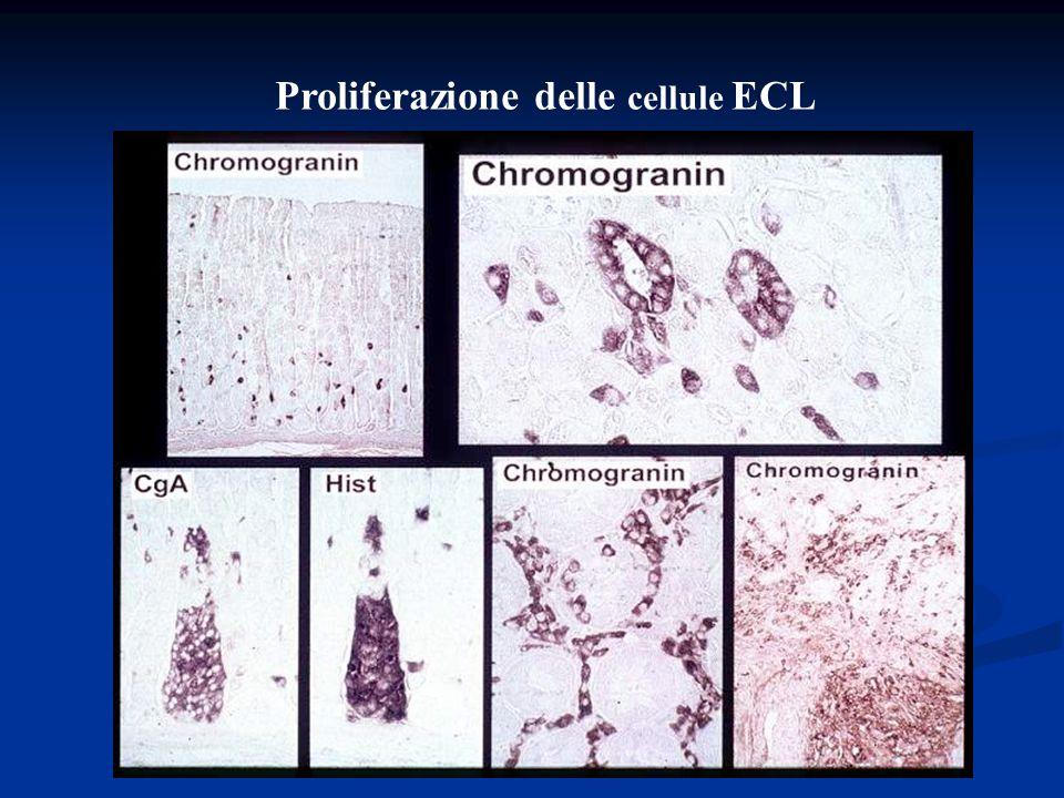 Proliferazione delle cellule ECL