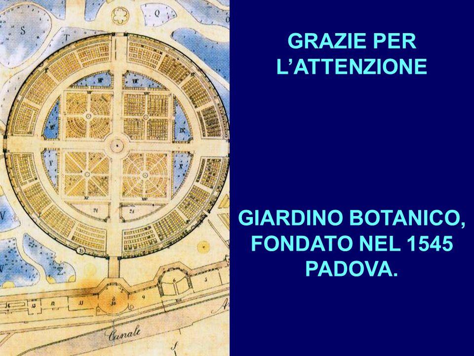GRAZIE PER L'ATTENZIONE GIARDINO BOTANICO, FONDATO NEL 1545 PADOVA.