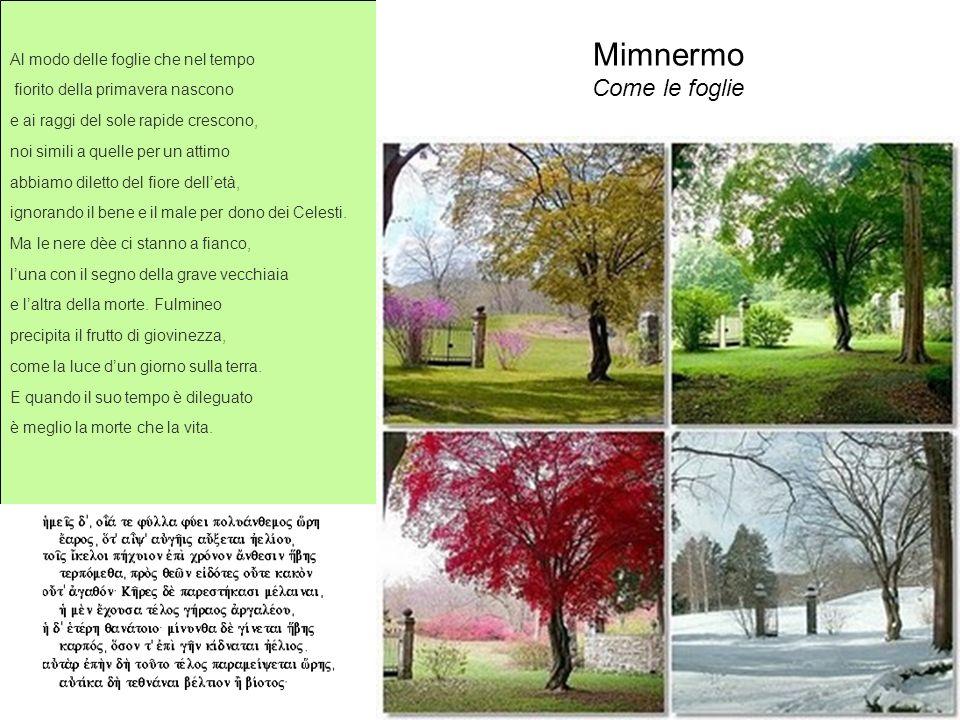 Mimnermo Come le foglie Al modo delle foglie che nel tempo